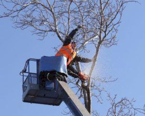 Договор валка и вырезка деревьев косгу