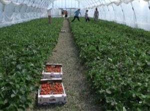 Субсидии на теплицы в краснодарском крае 2020