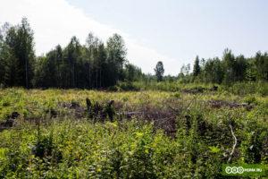 Лес для многодетных в перми